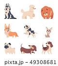 犬 巨体 ハスキーのイラスト 49308681