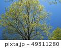新緑 樹木 木の写真 49311280