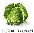 野菜 キャベツ 水彩のイラスト 49315374