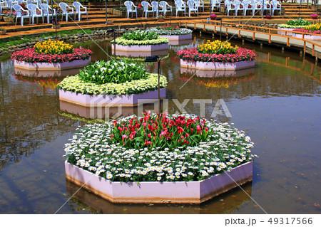 カラーの花 49317566