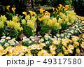 カラーの花 49317580