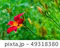 花 植物 芽の写真 49318380