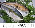 鰤 魚 鮮魚の写真 49331111