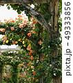 薔薇に覆われたアーチ 49333856