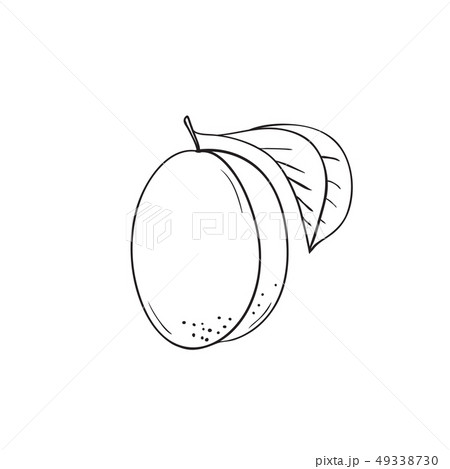 Coloring vector hand drawn fruit apricot 49338730