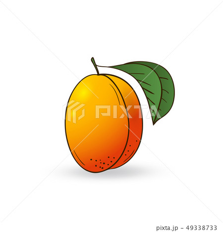 Vector hand drawn fruit apricot. 49338733