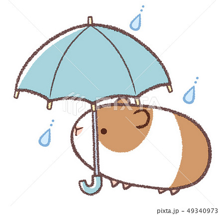 傘さしモルモット 49340973