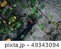 ロボットの腕と枯れ葉。限りある生命と際限のない命のコントラスト。テクノロジー/AI/RPAイメージ 49343094