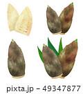 筍 春の味覚 春野菜のイラスト 49347877