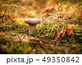 Mushroom Boletus In a Sunny forest in the rain. 49350842