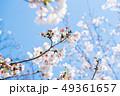 桜 春 花の写真 49361657