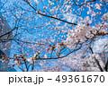 桜 春 花の写真 49361670