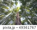 竹林 自然 竹の写真 49361767