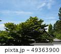 新緑輝く南禅寺境内 49363900