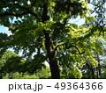 新緑輝く京都府立植物園 49364366