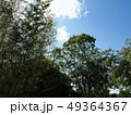 新緑輝く京都府立植物園 49364367