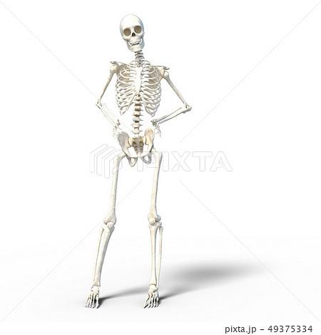 骸骨 骨格 スケルトンperming3DCG イラスト素材 49375334