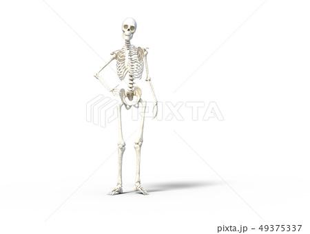 骸骨 骨格 スケルトンperming3DCG イラスト素材 49375337