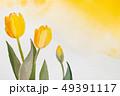黄色 チューリップ 水彩のイラスト 49391117