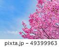 桜 春 青空の写真 49399963