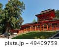 春日大社、大杉と中門、奈良県 49409759