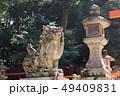 春日大社、二の鳥居の狛犬、奈良県 49409831