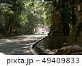 春日大社の参道、奈良県 49409833