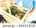 さぼてん サボテン 仙人掌の写真 49421618