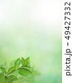背景-新緑-グリーン-春-夏-日差し 49427332