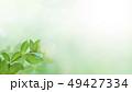 背景-新緑-グリーン-春-夏-日差し 49427334