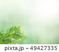 背景-新緑-グリーン-春-夏-日差し 49427335