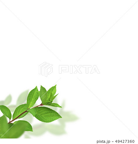 背景-新緑-グリーン-春-夏-白バック 49427360