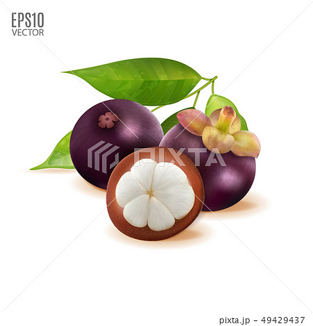 Vector Tropical fruit. Mangosteen with green leaves isolated on white background for package design 49429437