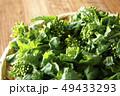 菜の花 菜花 春の写真 49433293
