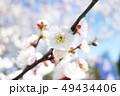 植物 自然風景 花 49434406