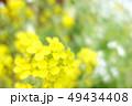 植物 自然風景 花 49434408
