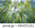 風景 自然 植物の写真 49435101