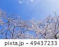 桜 染井吉野 花の写真 49437233