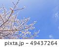 桜 染井吉野 花の写真 49437264