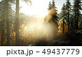 Sun Shining Through Pine Trees in Mountain Forest 49437779