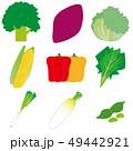 野菜 49442921