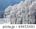 霧氷の樹木 霧氷 里山の冬 冬の花  49453491