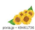 ひまわり 向日葵 水彩のイラスト 49461736