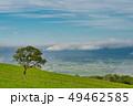 北海道 城岱牧場 木の写真 49462585