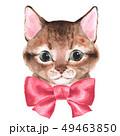 子猫 かわいい キュートのイラスト 49463850