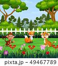 動物 野生 野生化のイラスト 49467789