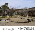 北野天満宮の梅(梅苑公開) 49476384