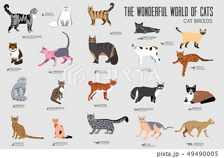 Vector breed cats icons set.  49490005