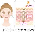しみの構造 女性の顔と肌の断面図 49491429