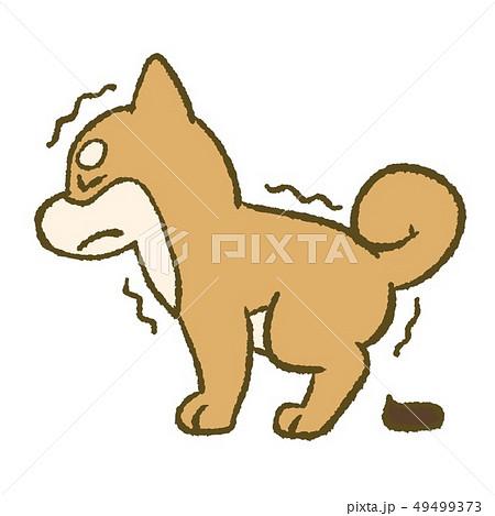 の うんち 画像 犬